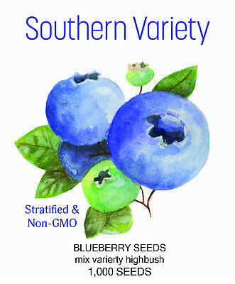 1000 Southern  Blueberry Bush Plant Seeds High Heat Tolerance