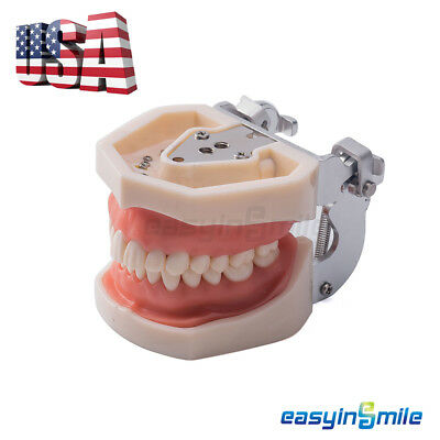 Dental Universal Plate 200H Type Removable Standard Tooth Model Soft Gum [USA]