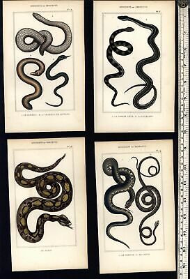Snakes Serpents c.1830's display collection 8 old hand colored prints