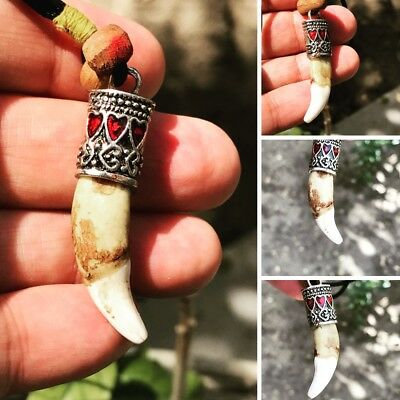 Spiritual قلاده سن الذيب نادرAmulet Dib Teeth Pendant  magic very rare