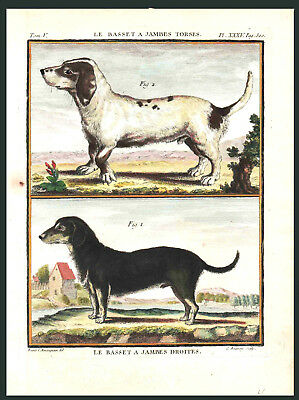 THE BASSET HOUND – 1766 Engraving of Two Varieties - Hand-Colored (original)