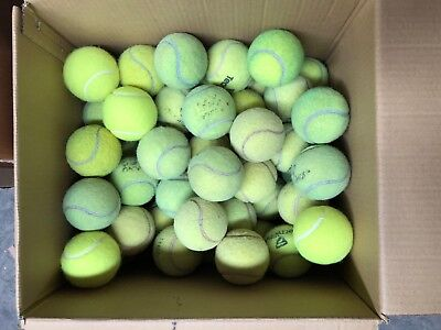 50 USED TENNIS BALLS FOR KIDS, DOGS, etc.....