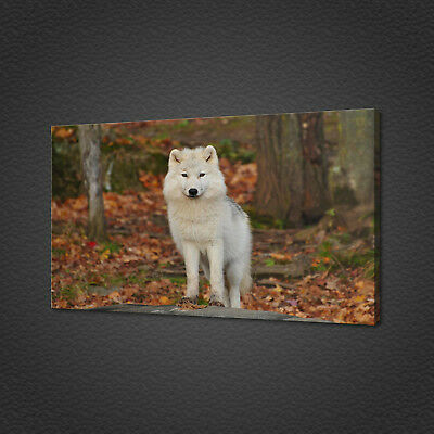 White Wolf Canvas Picture Print Wall Art Home Decor Free Fast Delivery