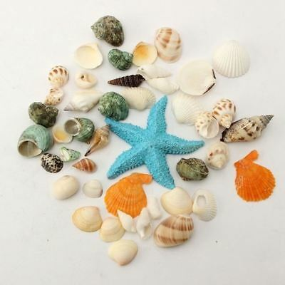 New Beach Mixed Seashells Mix Sea Natural Shells Shell Craft Aquarium Decoration