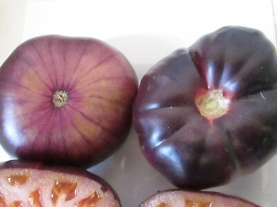 Spanish Blue Beef Tomato  -  20 Seeds