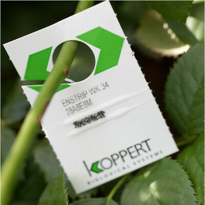Encarsia Whitefly Killer Greenhouse & Conservatory Natural Organic Pest Control