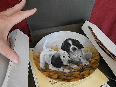 ENGLISH SETTERS ~ Collectible Plate ~ All the Paperwork, Box ~ NICE Collectible!