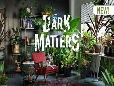 8-100 Plants | Low Light Levels - Indoor Packs Office /Home Decor