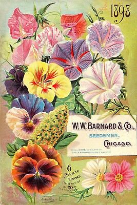 Barnard Collection Vintage Fruits Seed Packet Catalogue Advertisement Poster