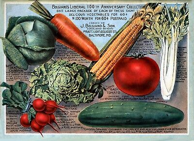 Bolgianos Collection Vintage Fruits Seed Packet Catalogue Advertisement Poster 2