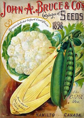 Bruce Collection Vintage Fruit Seeds Packet Catalogue Advertisement Poster 1