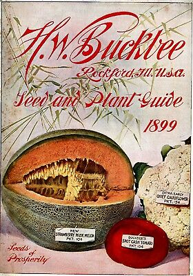 Buckbee Collection Vintage Fruit Seeds Packet Catalogue Advertisement Poster 4