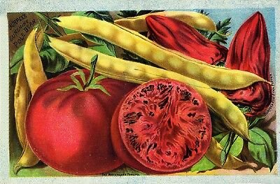 Burpee Collection Vintage Fruit Seeds Packet Catalogue Advertisement Poster 3