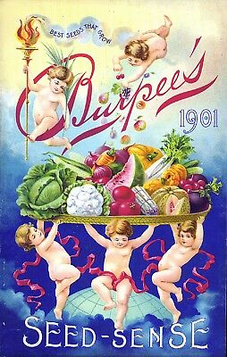 Burpee Collection Vintage Fruit Seeds Packet Catalogue Advertisement Poster 6