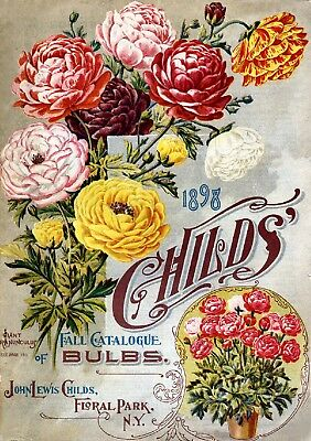 Childs Collection Vintage Fruit Seeds Packet Catalogue Advertisement Poster 8