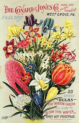 Conard Collection Vintage Fruit Seeds Packet Catalogue Advertisement Poster 5