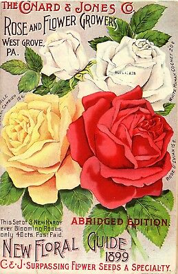 Conard Collection Vintage Fruit Seeds Packet Catalogue Advertisement Poster 6