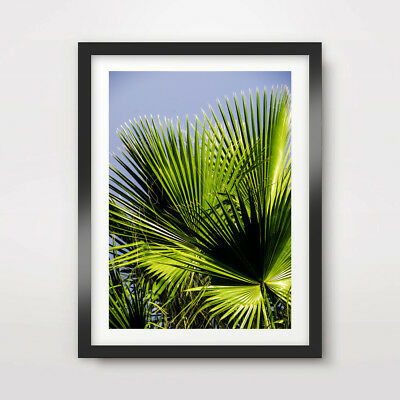 CLOSE UP TROPICAL LEAVES ART PRINT Photography Poster A4 A3 A2 Palm Tree Nature