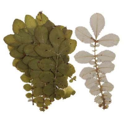 10pcs Pressed Real Dried Flowers Dried Leaves for DIY Resin Ornament Making