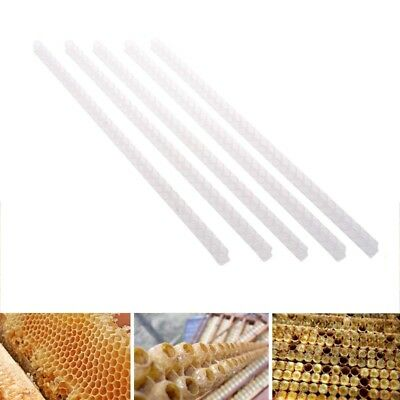 63 Holes Queen Bee Cell Bar Strip Set Base Beekeeping Tools With Queen Cel QMI