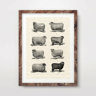 ANTIQUE SHEEP WOOL CHART FARM ART PRINT Animals Countryside Poster Wall Picture