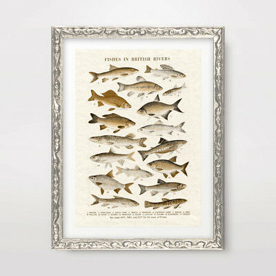 FISH FISHING VINTAGE CHART ILLUSTRATION ART PRINT Poster Home Decor Wall Picture