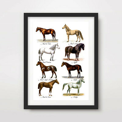 VINTAGE HORSE BREEDS PICTURE CHART EQUESTRIAN ART PRINT Poster Decor Wall Animal