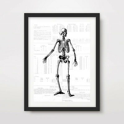 SIMPLE SKELETON BONES HUMAN CREEPY ART PRINT Poster Decor Chart Illustration