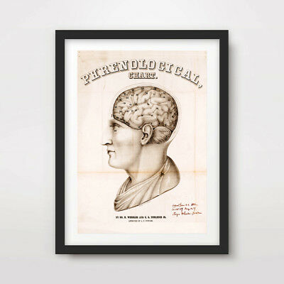 ANATOMICAL BRAIN ANTIQUE ART PRINT Poster A4 A3 A2 Wall Chart Old Illustrations