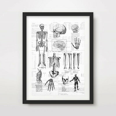 ANTIQUE HUMAN SKELETON DIAGRAM ART PRINT Poster Wall Chart Illustration A4 A3 A2