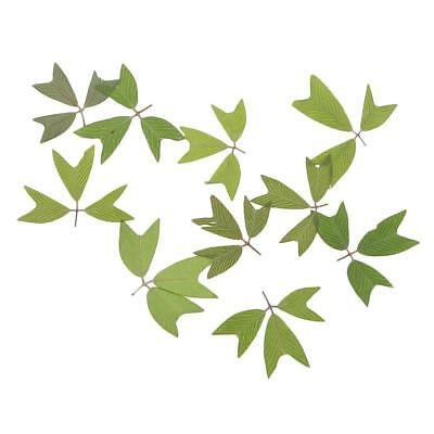 10x Pressed Plant Leaves Dried Flower Embellishment DIY Resin Jewelry Crafts