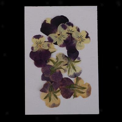 10x Pressed Dried Pansy Flower Embellishment DIY Resin Pendant Jewelry Craft