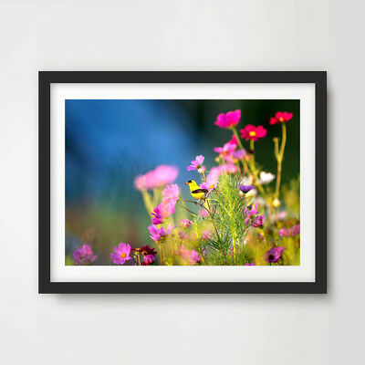 Colourful Wild Flowers FLORAL PHOTOGRAPH ART PRINT Decor Wall Nature A4 A3 A2