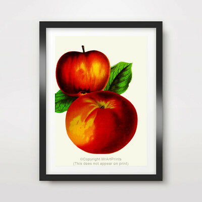 BRIGHT COLOURS FRUIT ART PRINT Kitchen Restaurant Food Decor Wall Red Apples