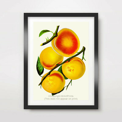BRIGHT COLOURS FRUIT ART PRINT Kitchen Restaurant Food Decor Wall Picture Poster