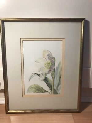Lovely Watercolour Painting Of Hellebore Flower In Gold Frame