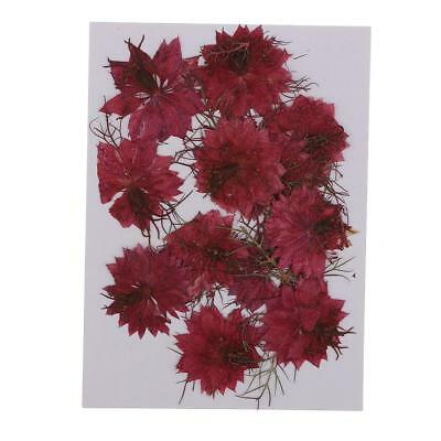 12x Pressed Real Dried Flowers Love-in-a-mist for Resin Ornament Making Red