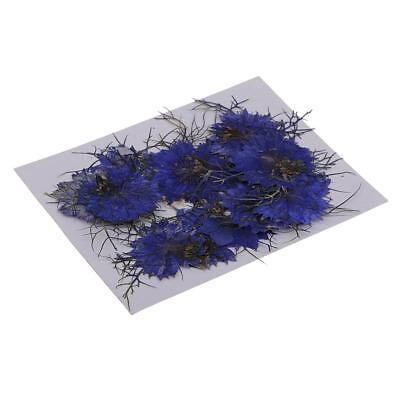 12x Pressed Real Dried Flowers Love-in-a-mist for Resin Ornament Making Blue
