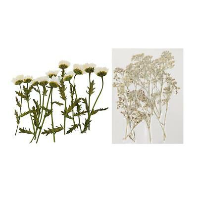 24x Real Dried Flowers Chrysanthemum Gypsophila for Resin Ornament Making