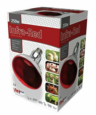Intelec 250W, Ruby Red Hard Glass Infra-Red Bulb.