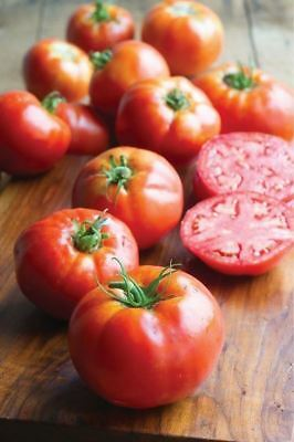 Vegetable - Tomato - Big Daddy - 10 Seeds #1538