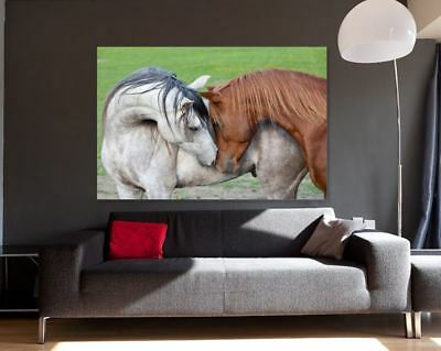 Horse Love beautiful new colorful Painting Canvas Print Home Decor Wall Art GIFT