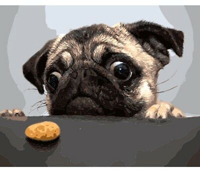Paint By Numbers Kit The Hungry Pug 40CMx50CM Canvas