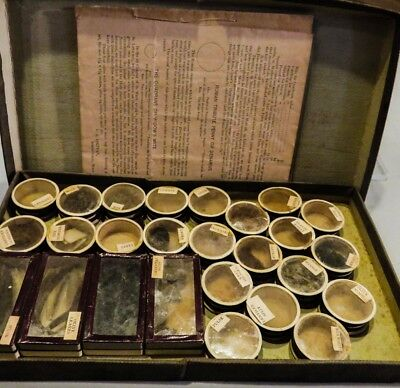 Antique 1890 PALESTINE MUSEUM CABINET Spices Seeds Powders BIBLICAL SPECIMENS