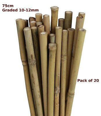 75cm Natural Bamboo Canes Garden Stake Flower Spike 10-12mm Pack of 20