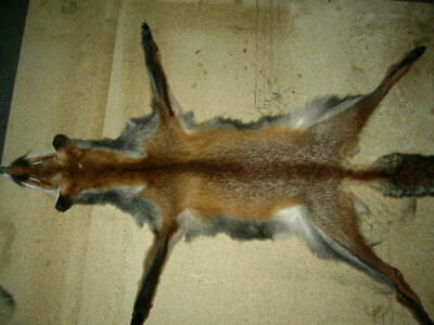 Tanned Australian Red Fox with face & all feet Tail hunt gift animal trap trophy