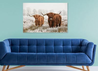 Highland cow couple Scottish cow  Home decor wall high quality Canvas print art