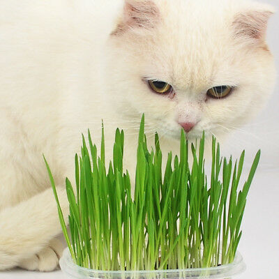 1 Bag/30g Harvested Cat Grass Approx 600 Seeds Organic Cat Snack Aid Digestion
