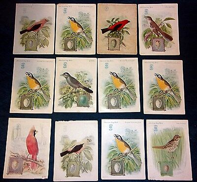 1920s Singer AMERICAN SONG BIRDS Cards - Lot Of 16