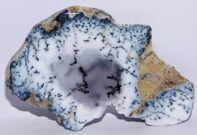 125cts. Natural Museum Size Dendrite Agate Opal Rough Gemstone Cab 4181